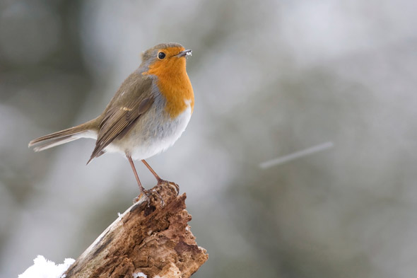 The nine golden rules for great winter nature